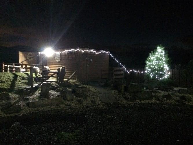Christmas – Ponies & Tree